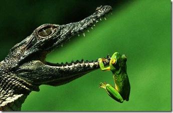 Ali-FrogB